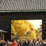 残り2日! 皇居「乾通り」特別公開とれたて紅葉レポート2015【写真あり】