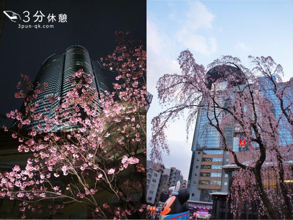港区の桜の花見スポット(六本木ヒルズ、ミッドタウン、芝公園、赤坂サカス)。新橋、銀座、青山、表参道からも近い!