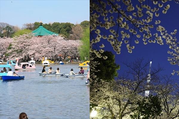 東京都内の桜の花見2大名所上野 VS 浅草が七番勝負2016! 混雑、歴史、アクセスなどで比較した結果