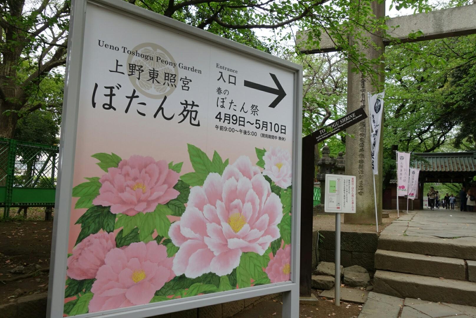 上野東照宮牡丹園