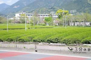 【農業大国・日本】太平の世の遺産(中編)