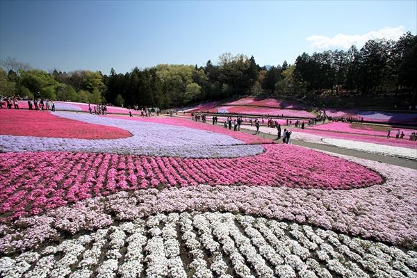 r13_芝桜の丘2