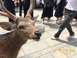 奈良と言えば鹿!かわいい!そして意外と危険で笑える看板も。