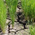 水不足と判断する条件・原因とダムと水道の関係とは!