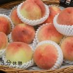 そろそろ始まる桃狩りシーズン!食べ放題やツアー情報を紹介