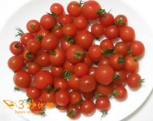 トマトの季節到来!関東近県のトマト狩り情報を紹介