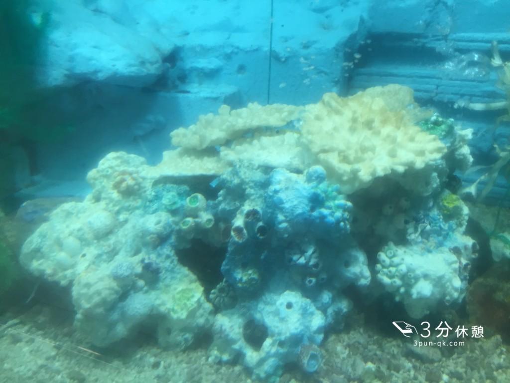 大阪の「かわいい水族館」に行ってみた