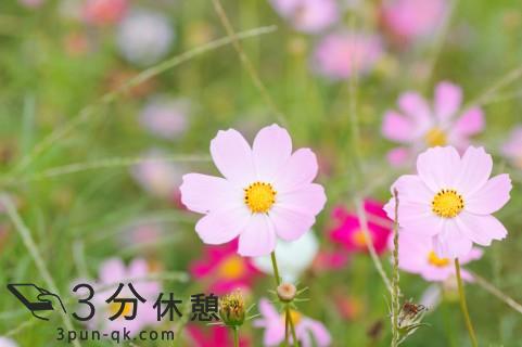コスモスや曼珠沙華が見ごろに!関東近県(東京、千葉、埼玉、神奈川)秋の花見情報