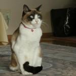 正座する猫が可愛すぎる!【画像/動画あり】